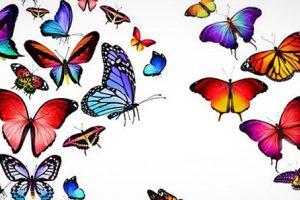 تصاویر باکیفیت پروانه